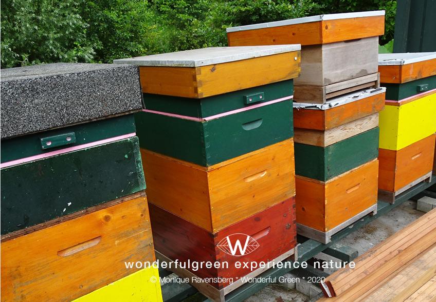 natuurwijs-Jan-Toorop-schooltuin-bee-home