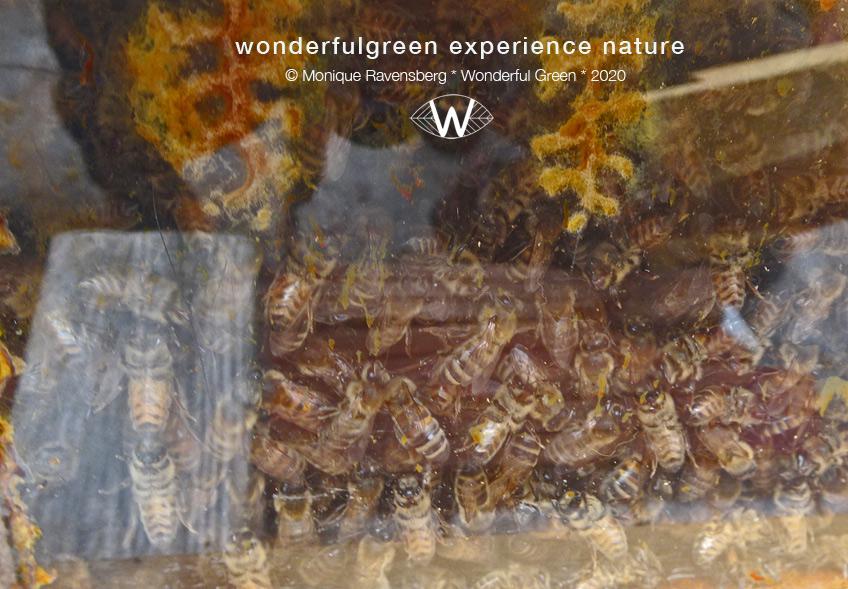 atuurwijs-Jan-Toorop-schooltuin-bee-population