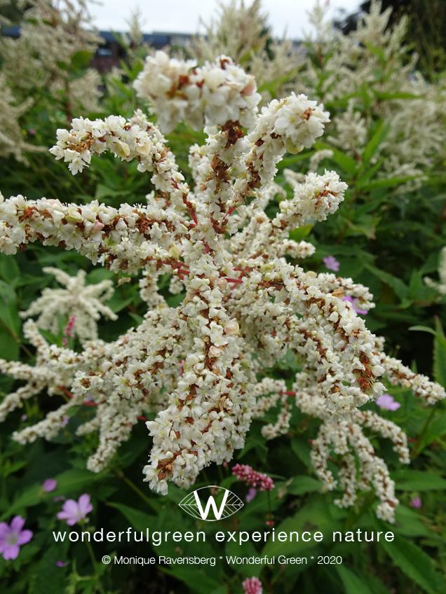 natuurwijs-Jan-Toorop-schooltuin-bloem