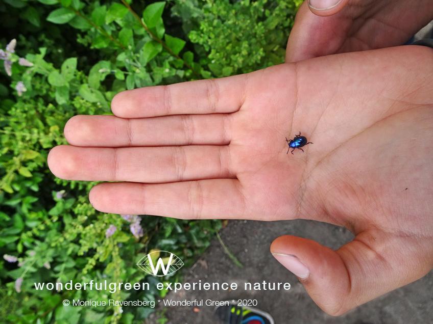 natuurwijs-Jan-Toorop-schooltuin-bug