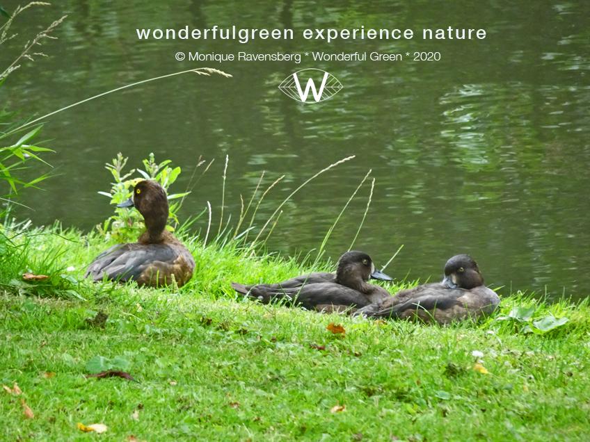 natuurwijs-Jan-Toorop-schooltuin-duck
