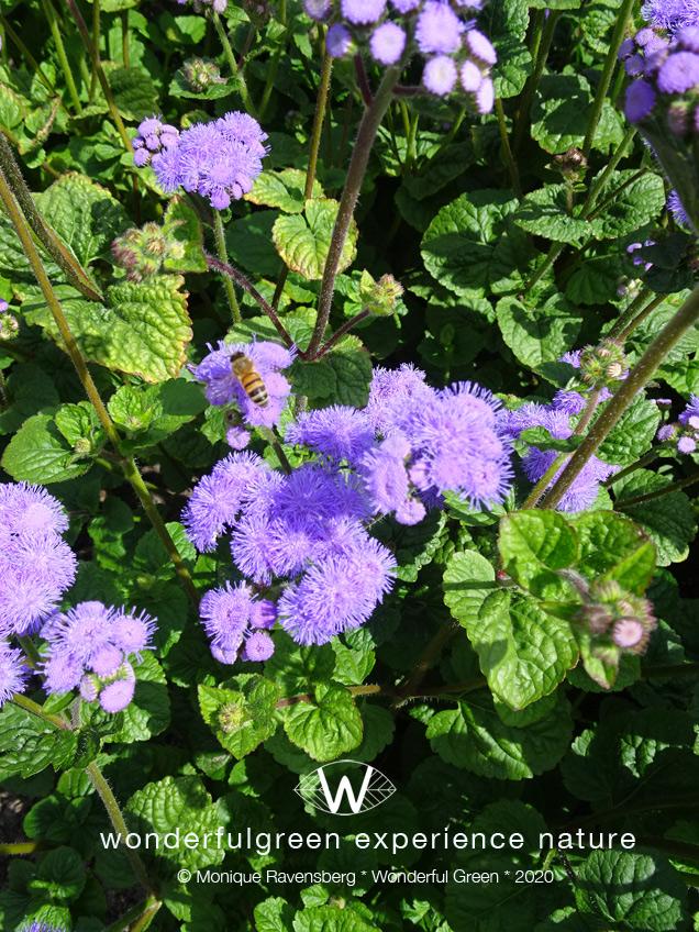 natuurwijs-Jan-Toorop-schooltuin-flower-bee