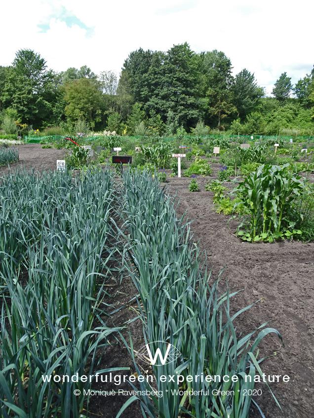 natuurwijs-Jan-Toorop-schooltuin-garden-beds