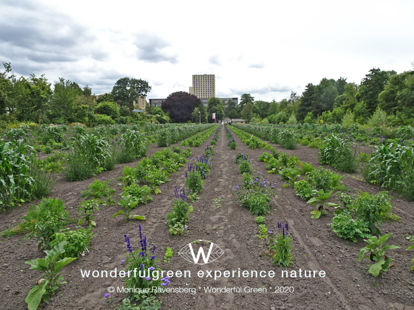 natuurwijs-Jan-Toorop-schooltuin-garden