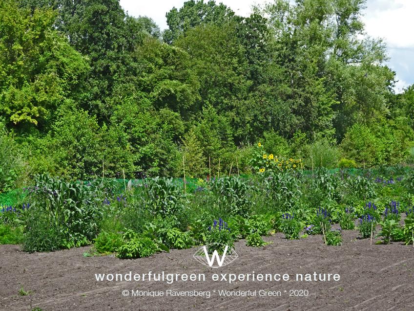 natuurwijs-Jan-Toorop-schooltuin-gardenview