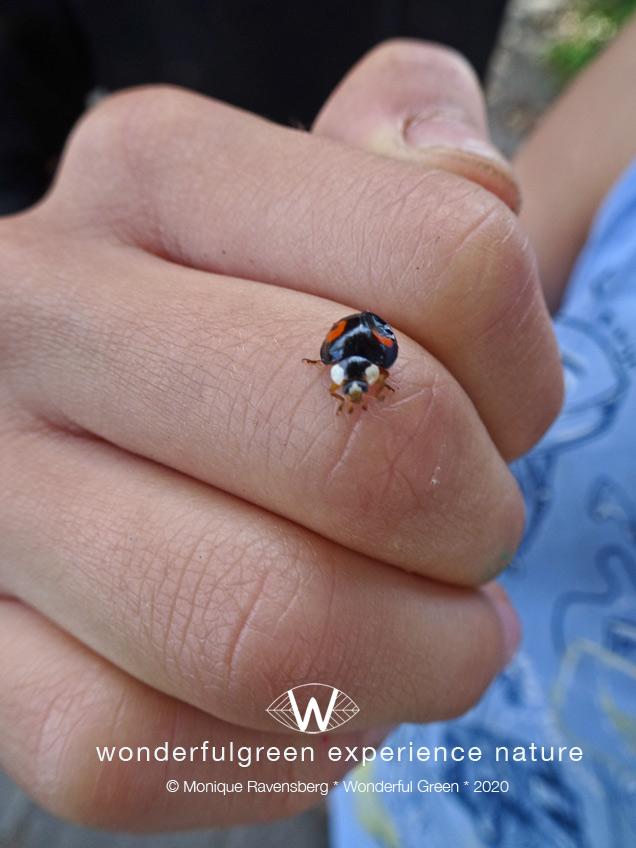 natuurwijs-Jan-Toorop-schooltuin-ladybug
