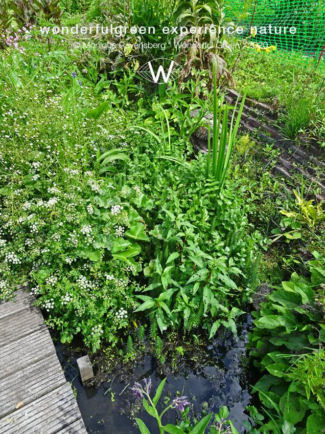 natuurwijs-Jan-Toorop-schooltuin-side-garden-water