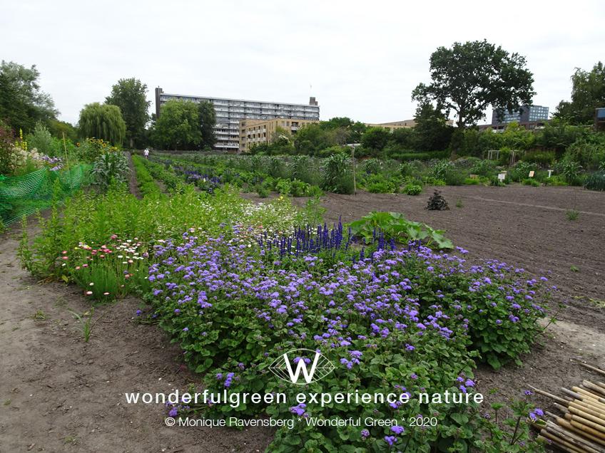natuurwijs-Jan-Toorop-schooltuin-tuin-view